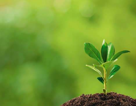 Prenons soin de la terre. Elle nous est confiée