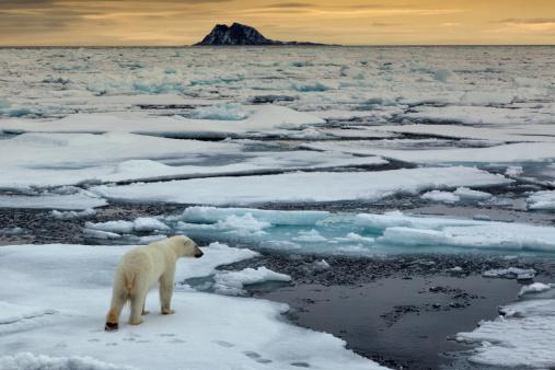 Les Églises et le changement climatique