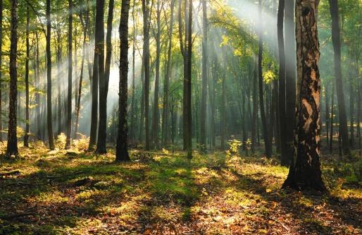 Une forêt française aux multiples enjeux