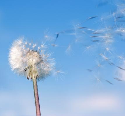 Rêver sa vie ou vivre ses rêves ?
